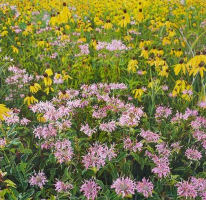 Jeffrey Vaughn Wildflowers #4 image courtesy the artist and Harris Gallery